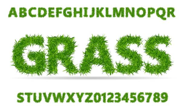 green grass font. lawn texture alphabet with numbers on white background. - grass stock illustrations