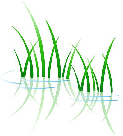 Green grass growing through water