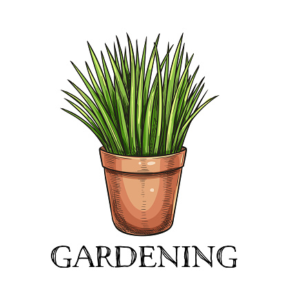 Green Grass In Pot Stock Illustration - Download Image Now