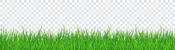 ilustrações, clipart, desenhos animados e ícones de grama verde isolado fundo transparente. ilustração vetorial - gramado terra cultivada