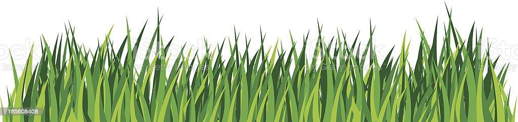 Green grass, Lawn. Detailed illustration vector art illustration