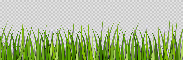 Green grass. Lawn for field. Sprouts of grass. Spring grassland for football. Green plant on meadow isolated on transparent background. Horizontal nature pattern with border. Ecology, garden. Vector