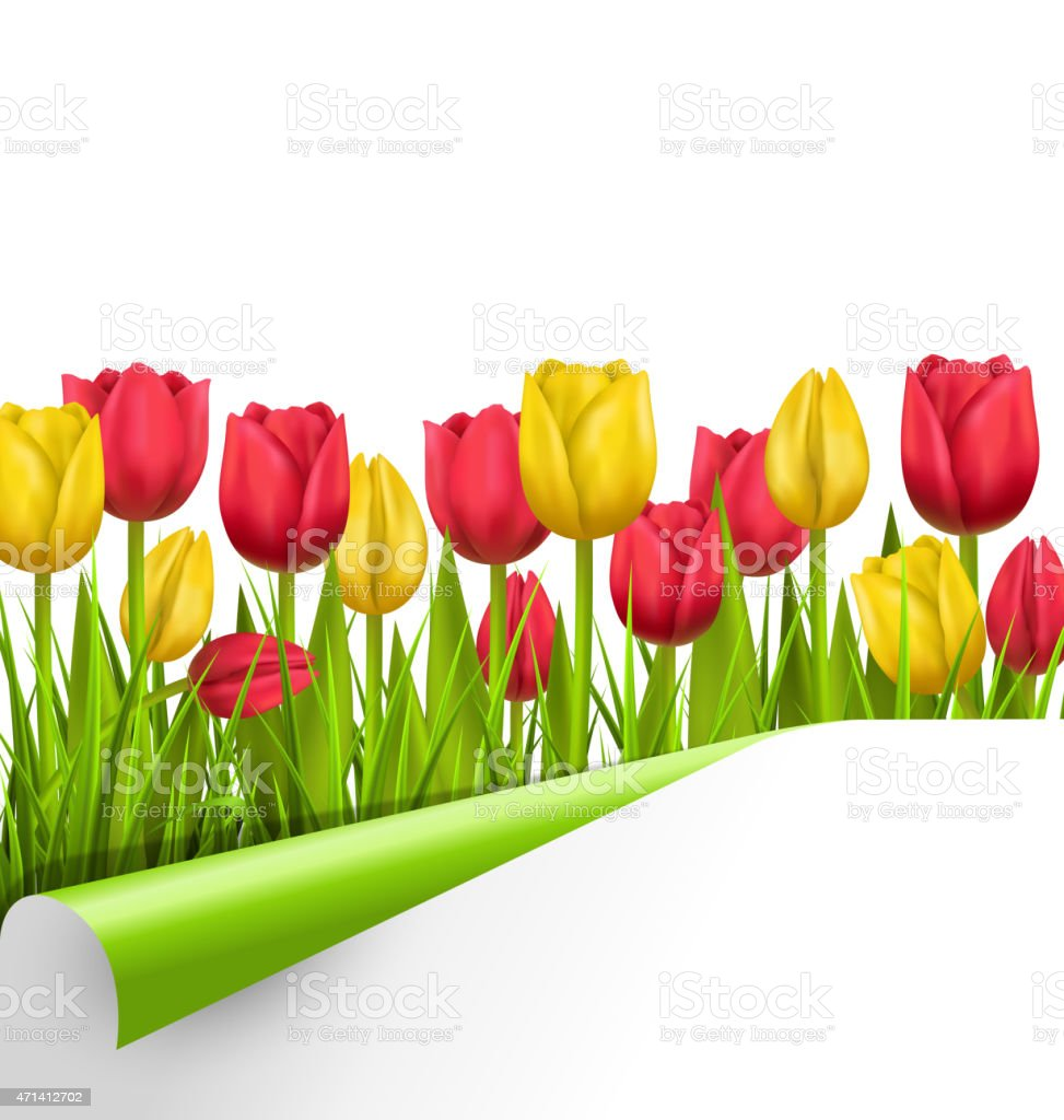 Green grass lawn with tulips and wrapped paper sheet isolated vector art illustration