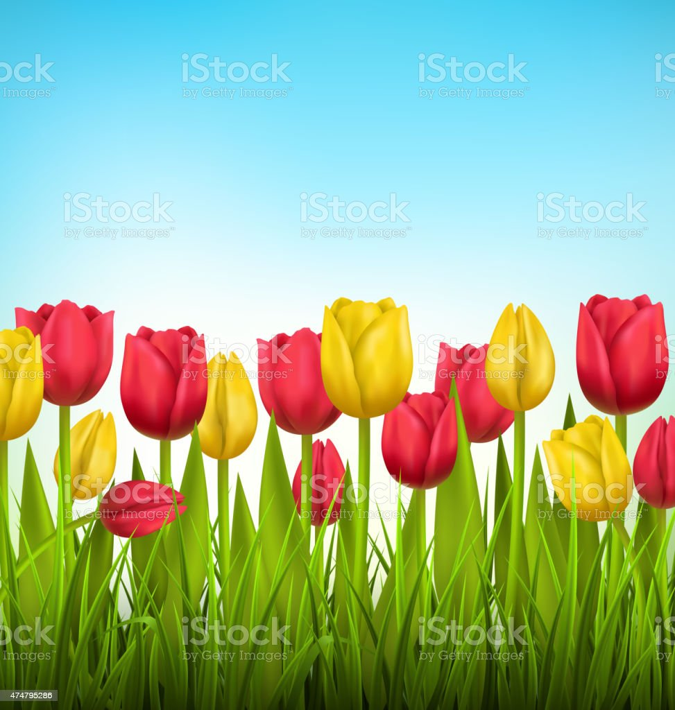 Green grass lawn with tulips on sky. Floral nature flower vector art illustration