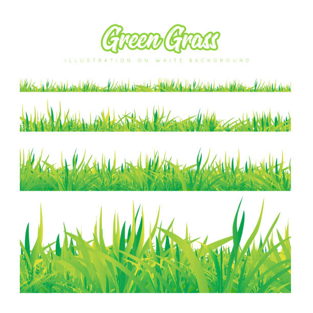 green grass of different heights - grass stock illustrations