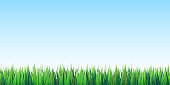 istock Green grass on blue sky seamless background 1215553206