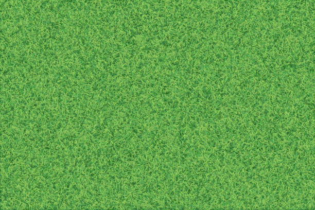 Green grass realistic textured background. vector art illustration