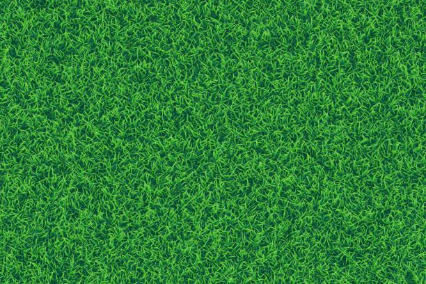 ilustrações, clipart, desenhos animados e ícones de grama verde fundo texturizado realista. - gramado terra cultivada