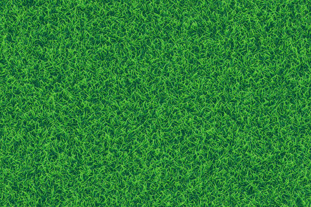 stockillustraties, clipart, cartoons en iconen met groene gras realistische getextureerde achtergrond. - gras