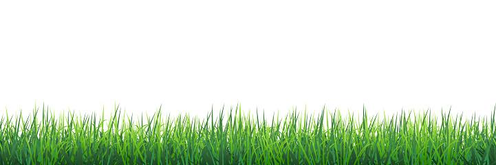 Green grass seamless border