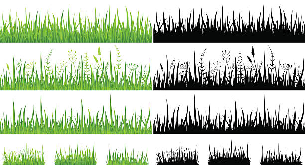 stockillustraties, clipart, cartoons en iconen met green grass - seamless pattern and silhouettes - illustration - grasspriet