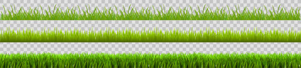 Green grass set, field, nature eco background - stock vector Green grass set, field, nature eco background - stock vector annotation stock illustrations