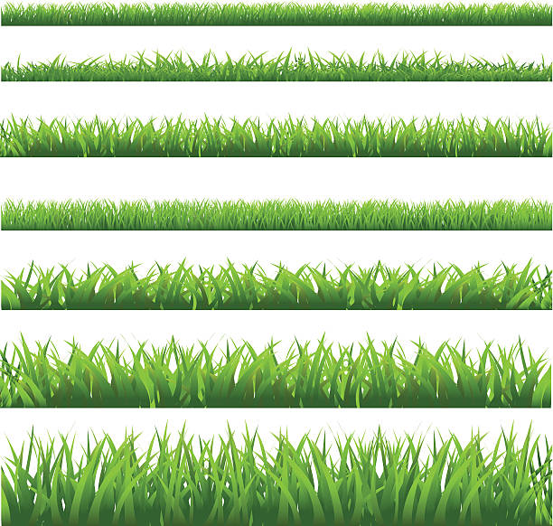 stockillustraties, clipart, cartoons en iconen met green grass set - grasspriet