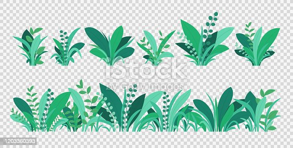 Green grass. Spring and summer various plants, grass and bushes. Natural elements of grass isolated on transparent background.