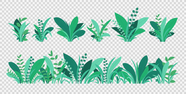 green grass. spring and summer various plants, grass and bushes. natural elements of grass isolated on transparent background. - куст stock illustrations