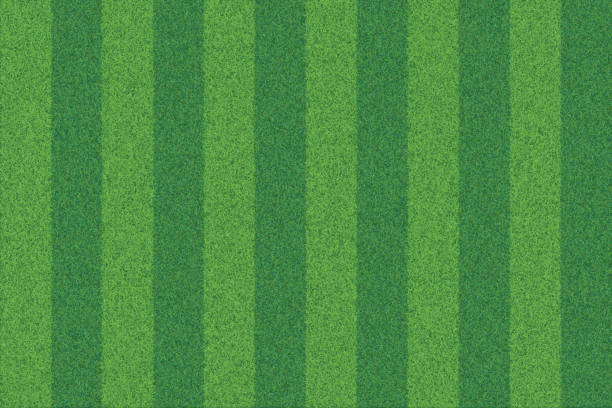 green grass striped realistic textured background - football field stock illustrations