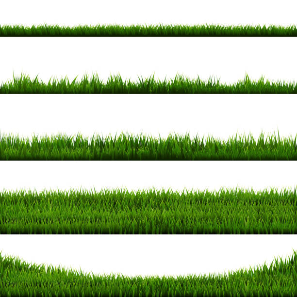 green grass - крупный план stock illustrations