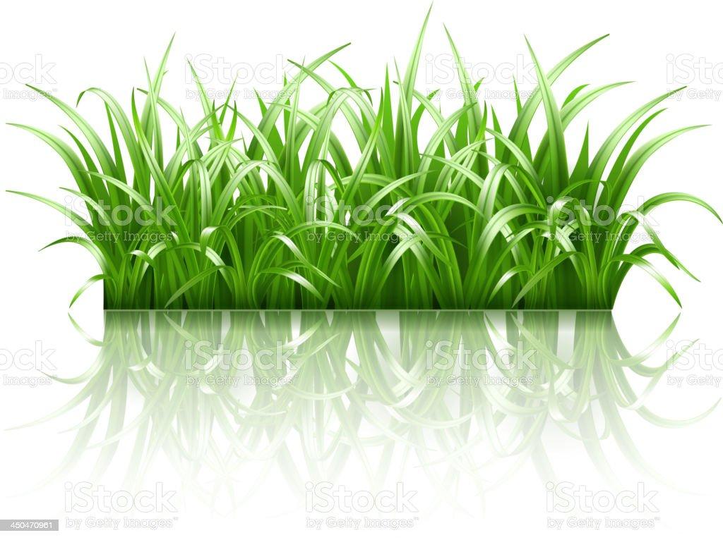 Green grass, vector vector art illustration