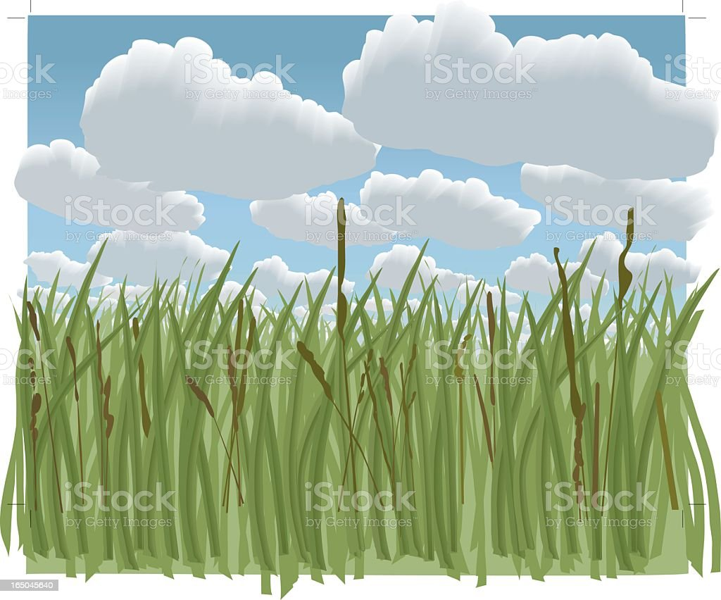Green grass with big clouds vector art illustration
