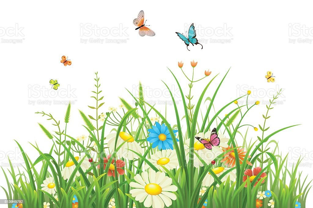 Green grass with flowers vector art illustration