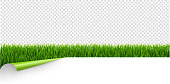 Green Grass With Green Corner Transparent Background With Gradient Mesh, Vector Illustration