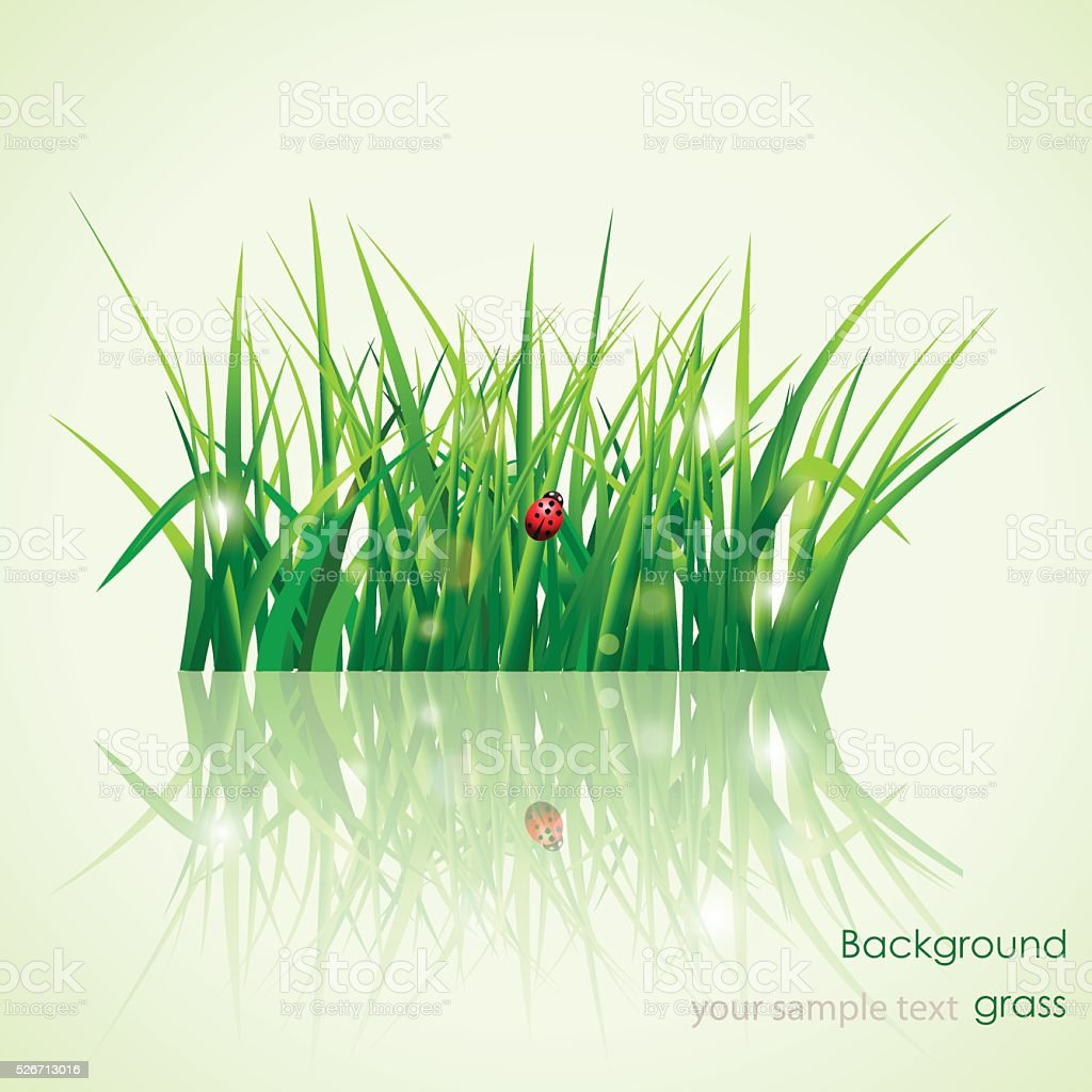 Green grass.Background vector art illustration