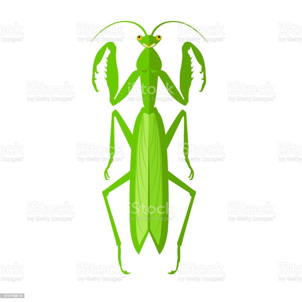 Green Grasshopper Icon vector art illustration
