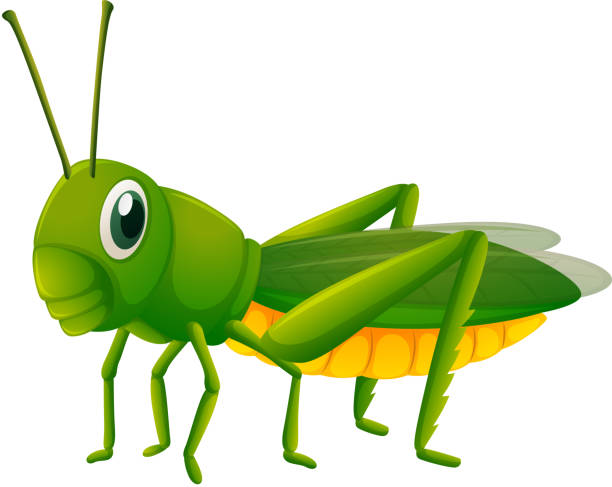 Cricket Vector Background Stock Image: Top 60 Cricket Insect Clip Art, Vector Graphics And