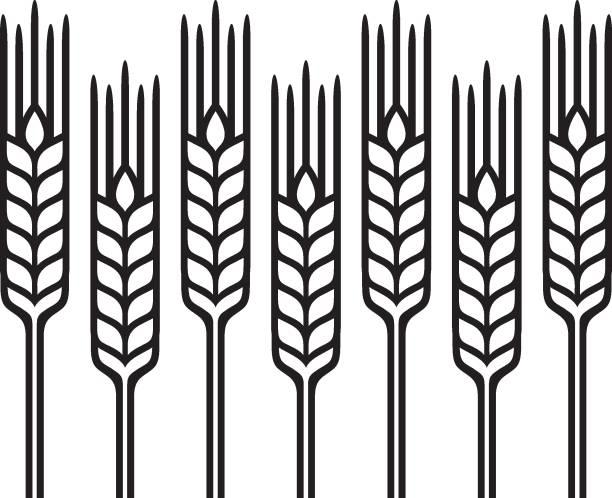 yeşil simge 1b - buğday stock illustrations