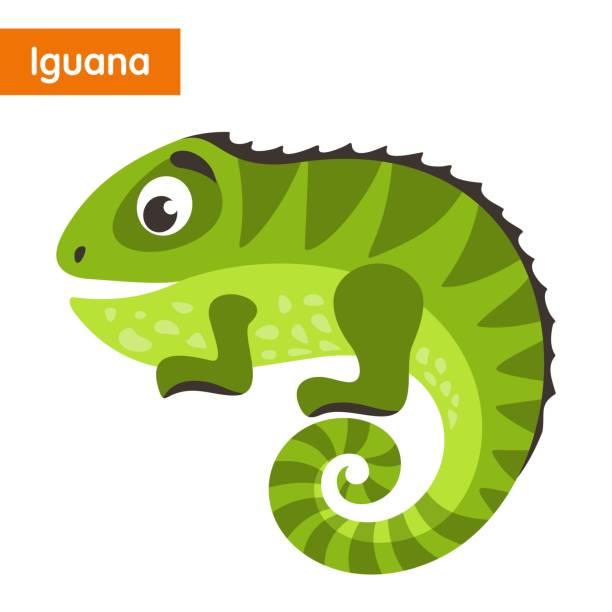 Top 60 Iguana Clip Art, Vector Graphics and Illustrations ...