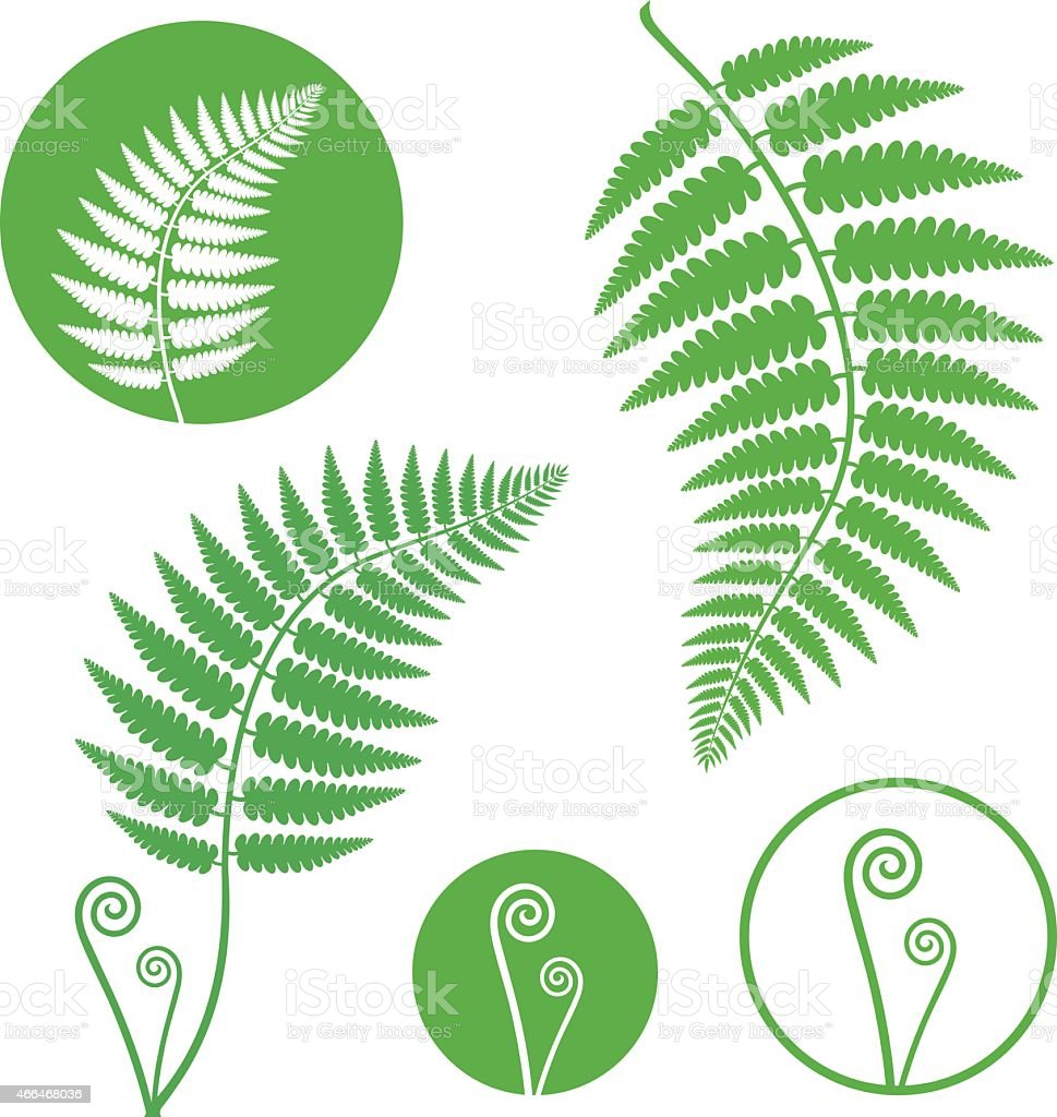 Green illustrations of fern fronds and icons on white back vector art illustration