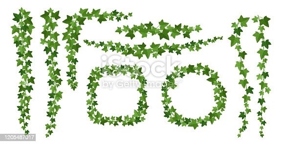 Green ivy frames flat vector illustrations set. Borders from evergreen climbing woody plants isolated on white background. Branches and leaves. Botanical design elements collection