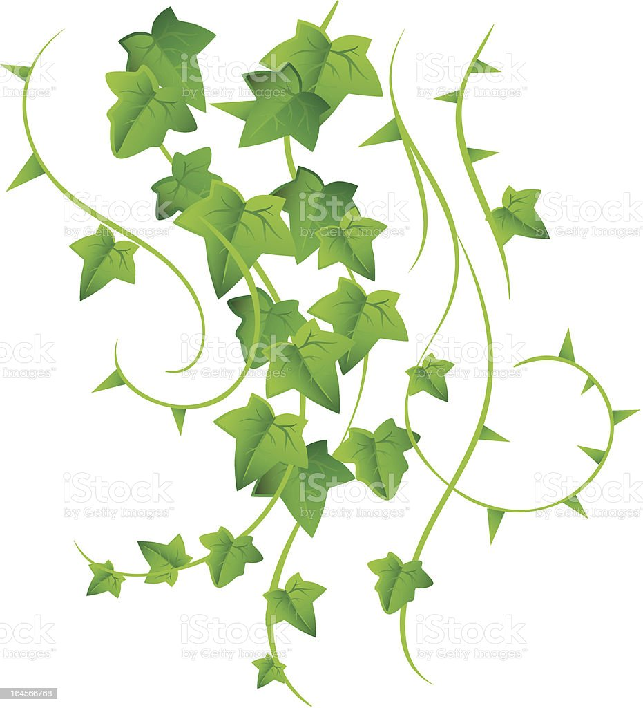 Green ivy vector art illustration