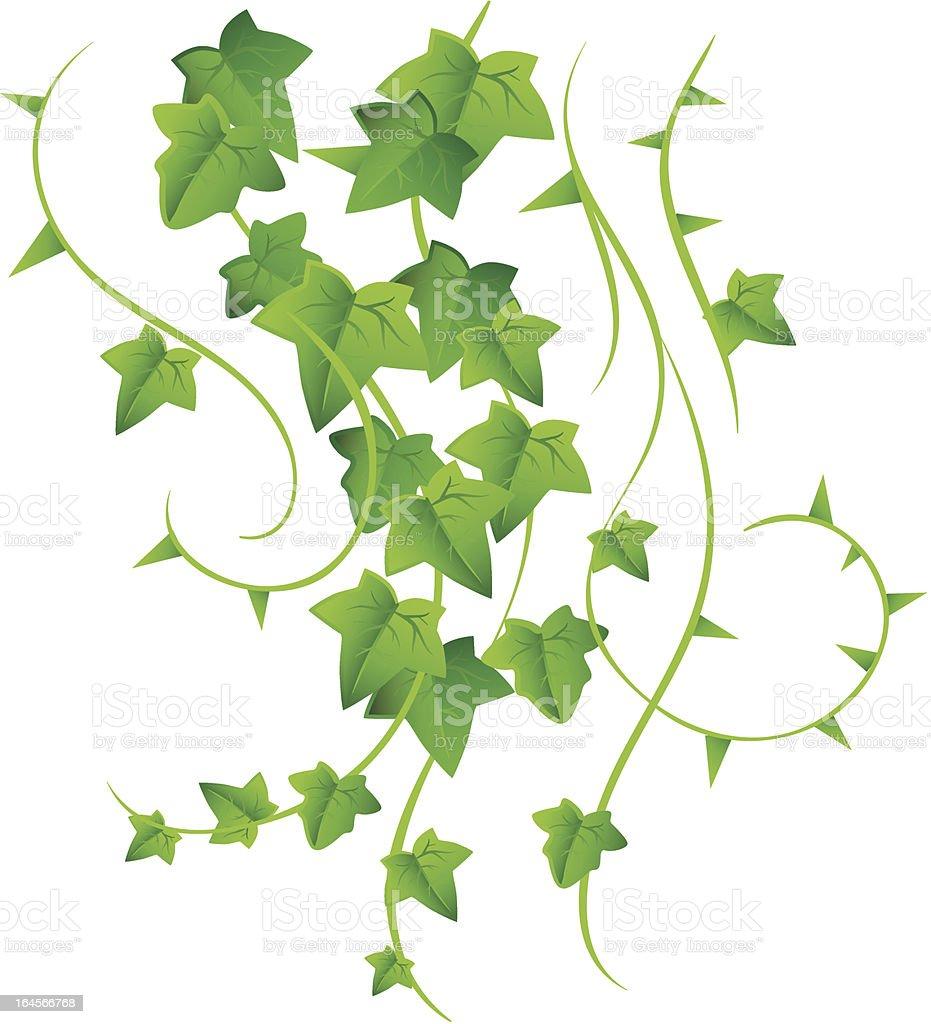 Green ivy vector art illustration