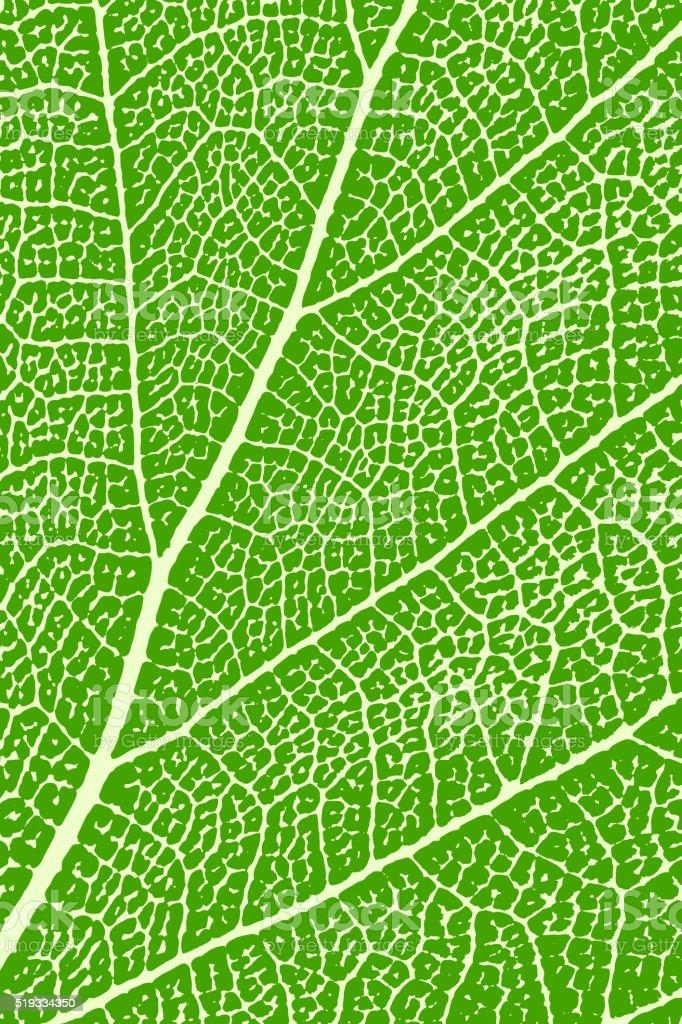 Green leaf close up. Leaf macro. Background, vector illustration vector art illustration