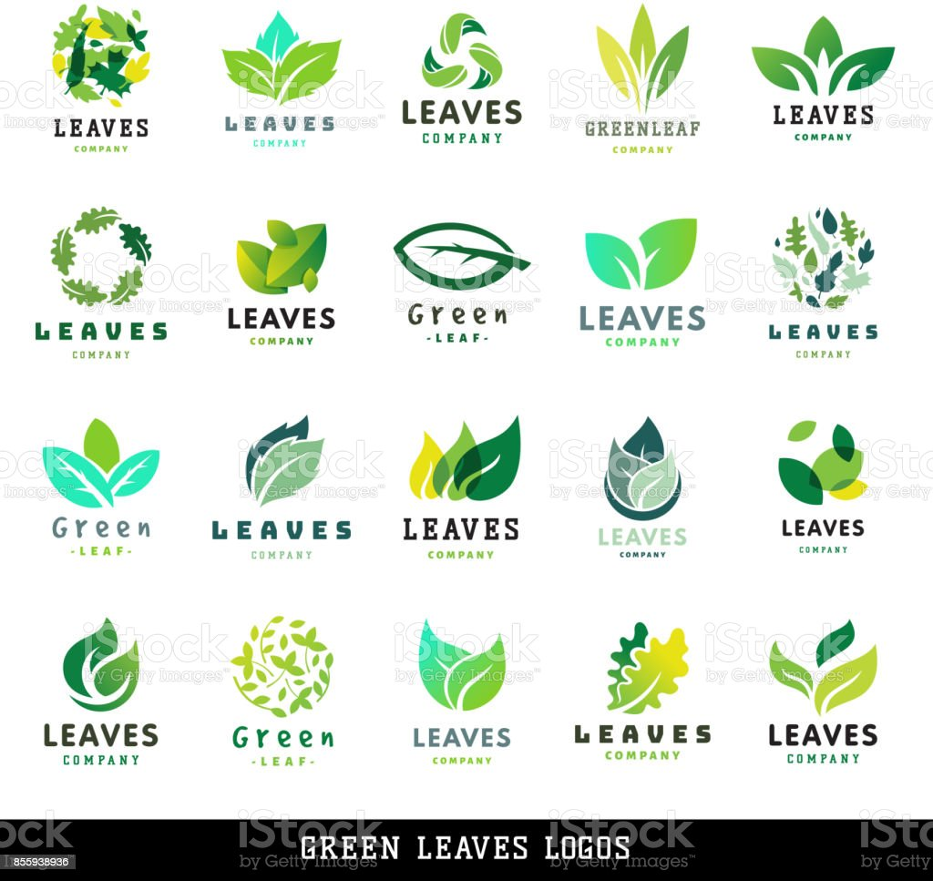 Green leaf eco design friendly nature elegance label natural element ecology organic vector illustration vector art illustration