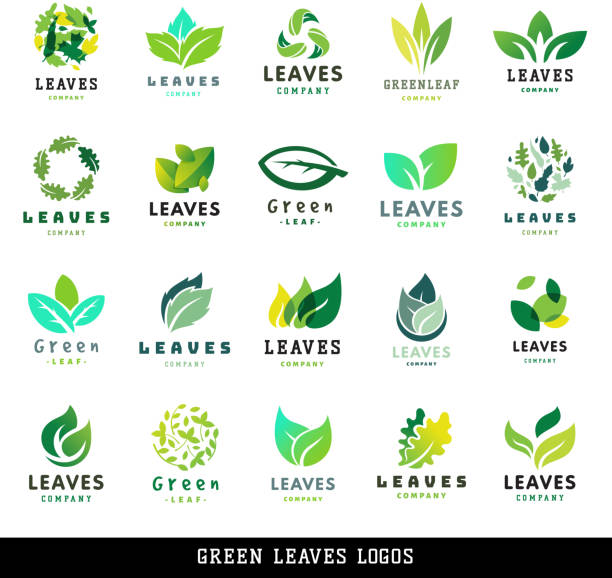 illustrazioni stock, clip art, cartoni animati e icone di tendenza di green leaf eco design friendly nature elegance label natural element ecology organic vector illustration - foglie