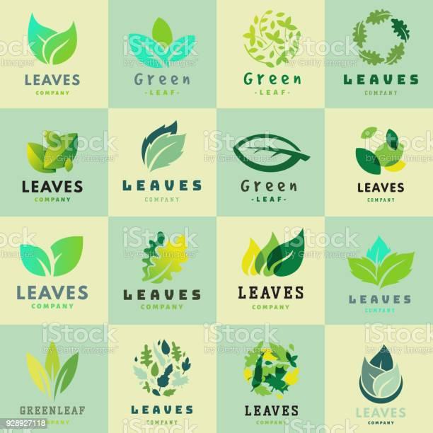 Green leaf eco design friendly nature elegance symbol and natural vector id928927118?b=1&k=6&m=928927118&s=612x612&h=vmkwnzsdzcskzic0dm3zlhdquaxg19xi 6sg9tx hka=