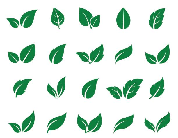 illustrazioni stock, clip art, cartoni animati e icone di tendenza di green leaf icons set - foglie