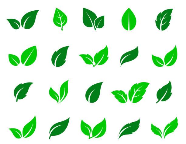zielony liść ikony zestaw - jedzenie wegetariańskie stock illustrations