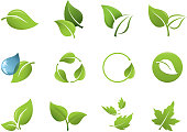 Various vector leaf icons. Includes a JPG, and a transparent PNG.