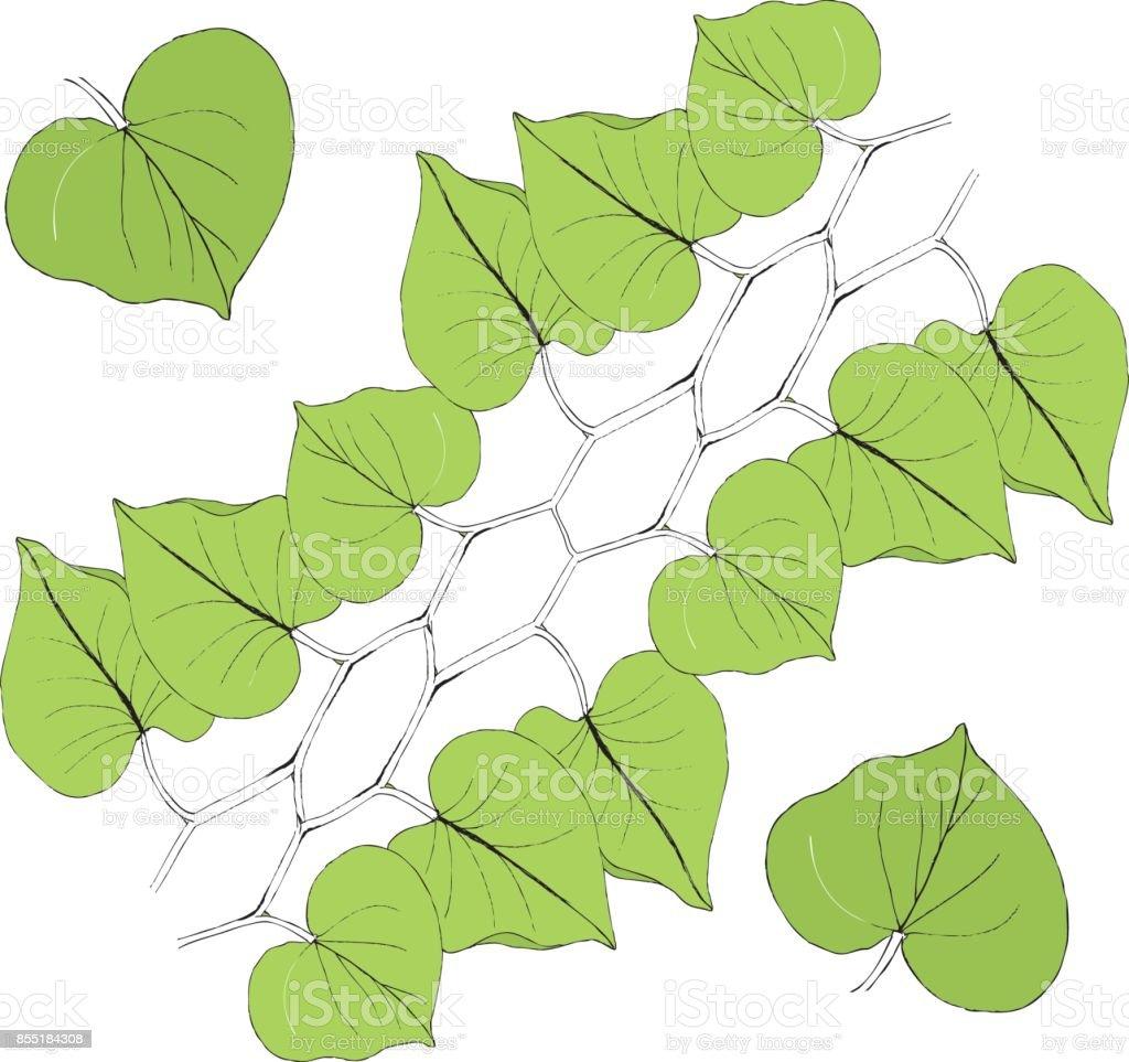 Green leaf line icon vector illustration on white background vector art illustration