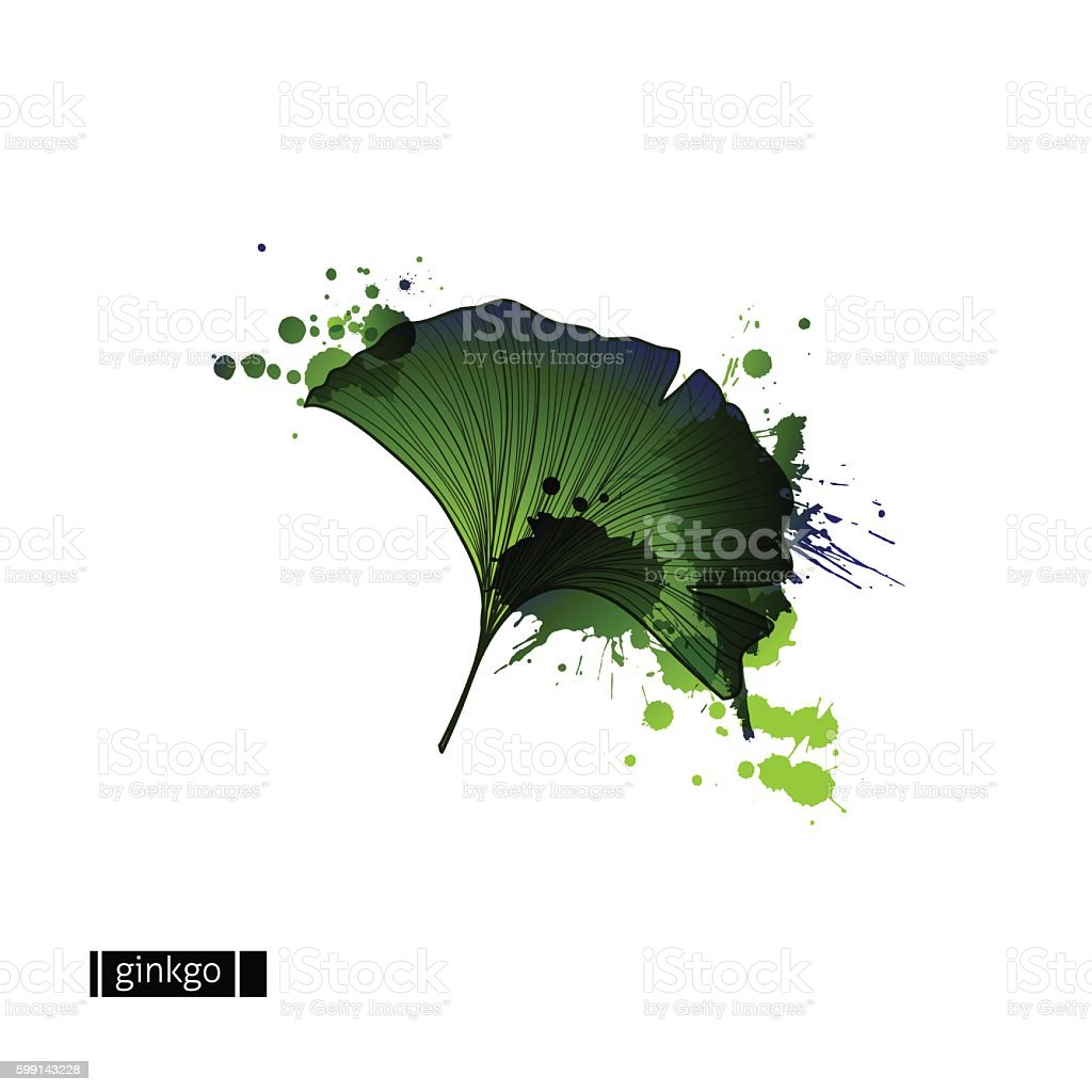 Green leaf of ginkgo with blots vector art illustration