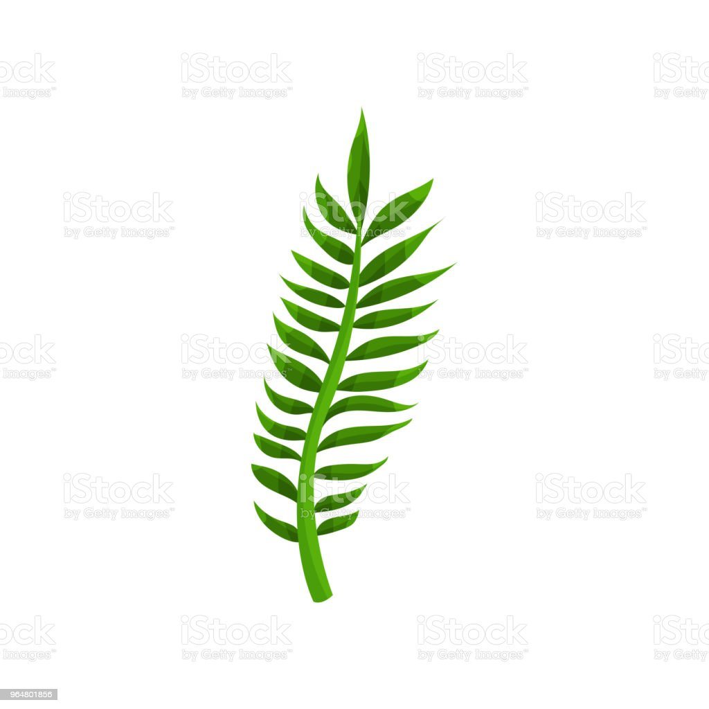 Green leaf of tropical plant from jungle. Nature theme. Flat vector element for botanical book, postcard or textile royalty-free green leaf of tropical plant from jungle nature theme flat vector element for botanical book postcard or textile stock vector art & more images of cartoon