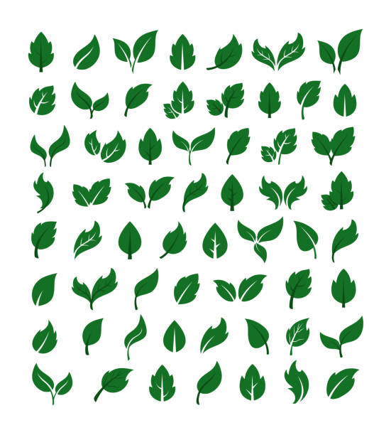 Green leaf ornament silhouette isolated set collection. Vector flat graphic design cartoon illustration vector art illustration