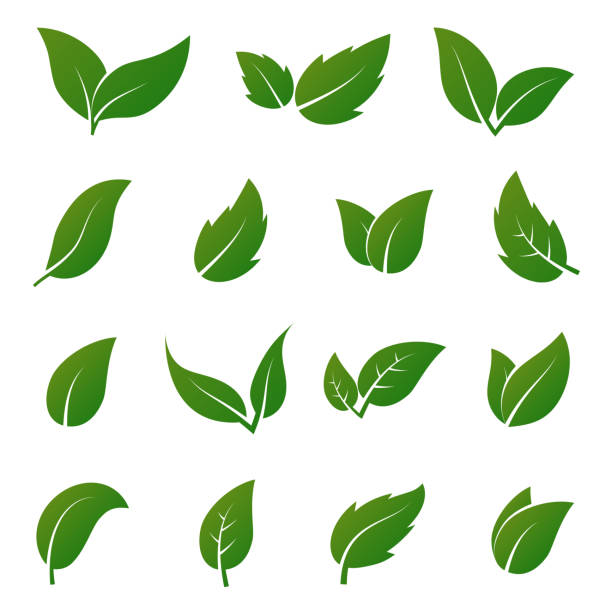 green leaf vector icons. spring leaves ecology symbols - лекарственная трава stock illustrations