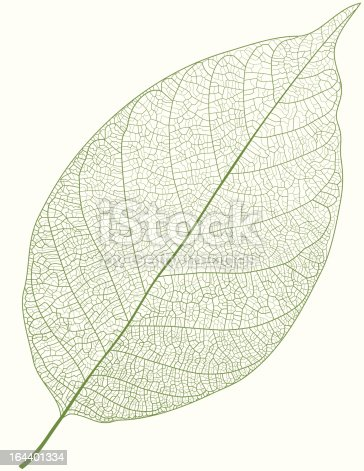 istock Green Leaf 164401334