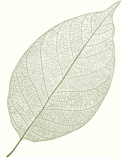 зеленый лист - предельно крупный план stock illustrations