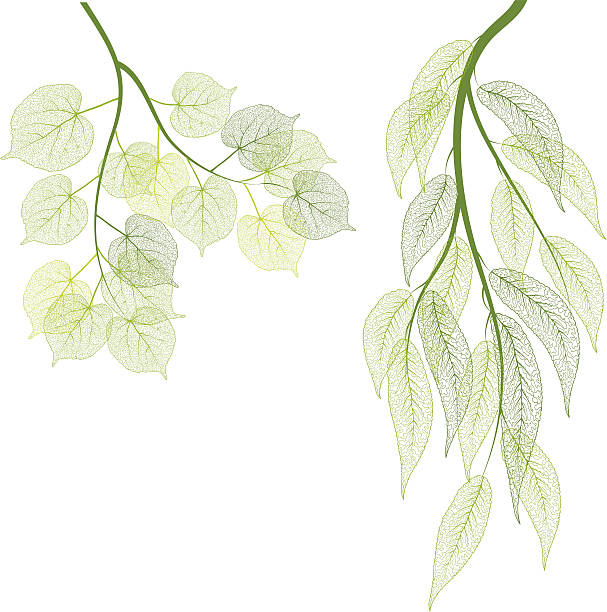 Green leaf vector art illustration