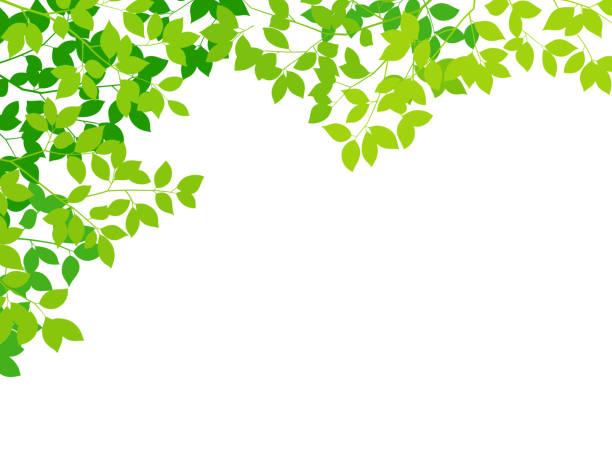 zielony liść białe tło - gałąź część rośliny stock illustrations